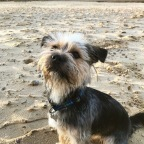 My dog friendly holiday to Suffolk