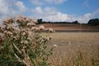 Felley Mill walk, Nottinghamshire