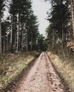 Cotgrave Forest walk