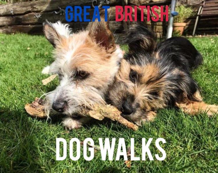 Great British Dog Walks