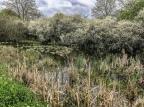 Circular Cossall canal walk